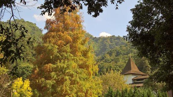 Lavender Cottage 사진