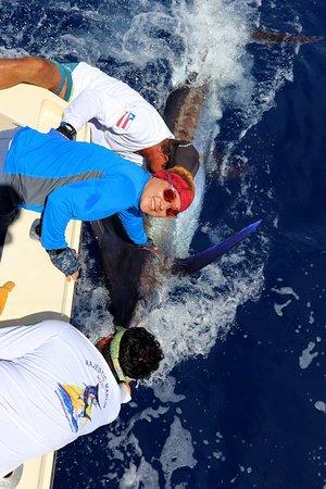 Releasing a blue Marlin with Marcos Hamano. Liberando um marlin azul com o Marcos Hamano.