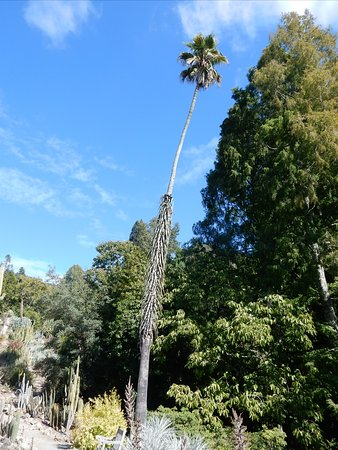 Foto de UC Botanical Garden at Berkeley