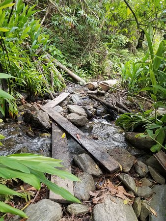 Lorenzo Expeditions: Hiking through the jungle on Day 2