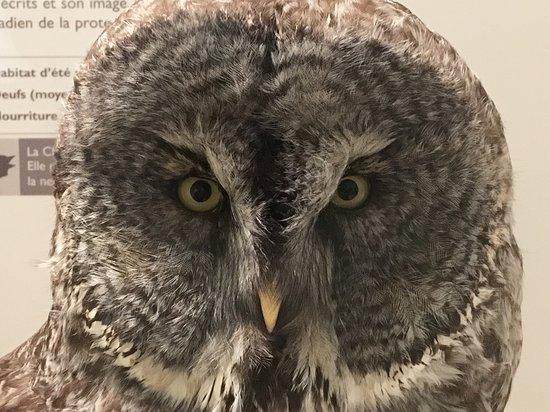 Оттава, Канада: Bird Exhibit - Photo taken through glass