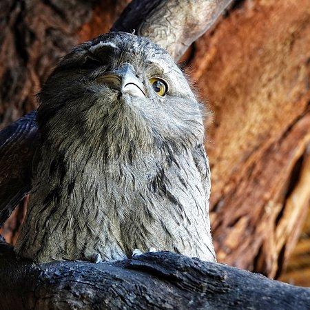 Bonorong Wildlife Sanctuary 사진