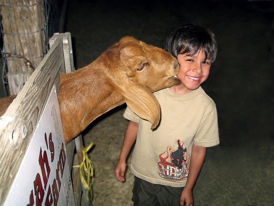 The animals in our petting farm love to see you