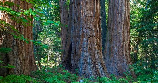 Tahoe National Forest Headquarters (Nevada City) - 2020 All You Need to Know BEFORE You Go (with Photos) - Tripadvisor
