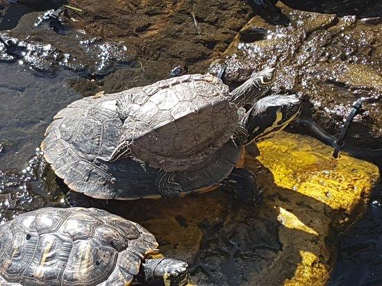 Графство Чешир, UK: Some of our rescue animals 🐢