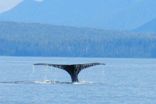 Sitka Super Saver: Whale-Watching...