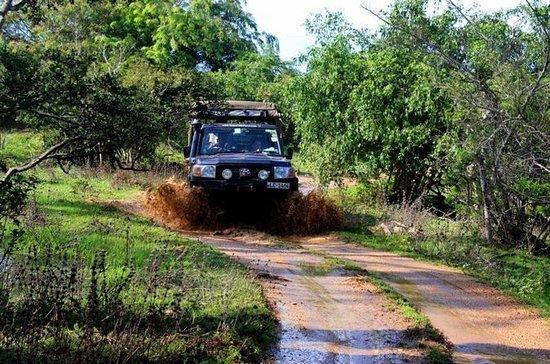 Privat tur: Udawalawe National Park...