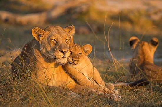 Safari naturalistico di 4 giorni e