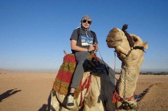 Tour privado en Aswan Camel Safari