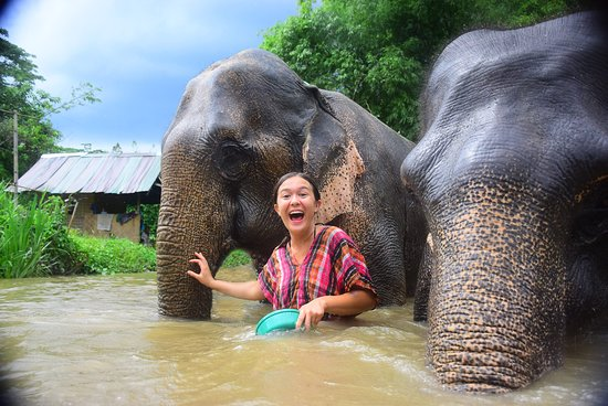 大象修养公园