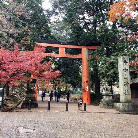 Tamukeyama Hachimangu Shrine