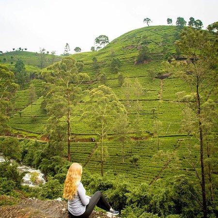 Sri Lanka 🇱🇰 tourism #lankasafetours