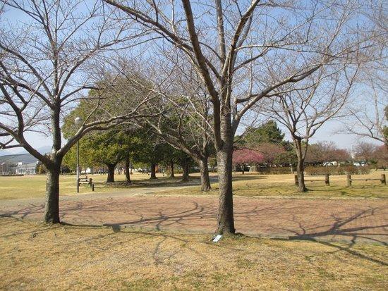 Matsusaka Photo