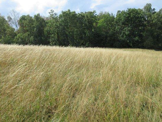 nice fields