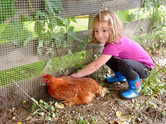 Viele Tiere auf unserem Bauernhof. Many animals on our farm.