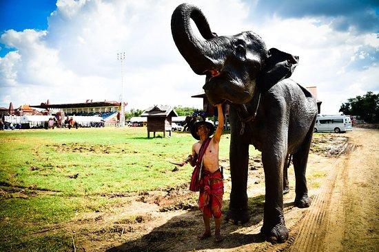 งานแสดงช้าง จังหวัดสุรินทร์