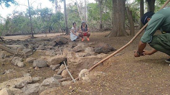 Komodo Island Tours: One day trip