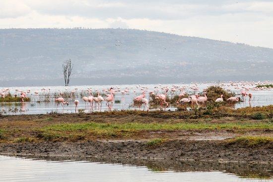 Jumbo Kenya Safaris: lac Nakuru