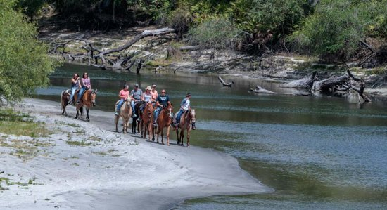 Arcadia, FL: Enjoy horseback riding on the banks of the beautiful Peace River. Bring your whole Family experience the Peace River just like the settlers did.