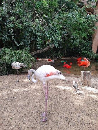 Contato direto com aves raras