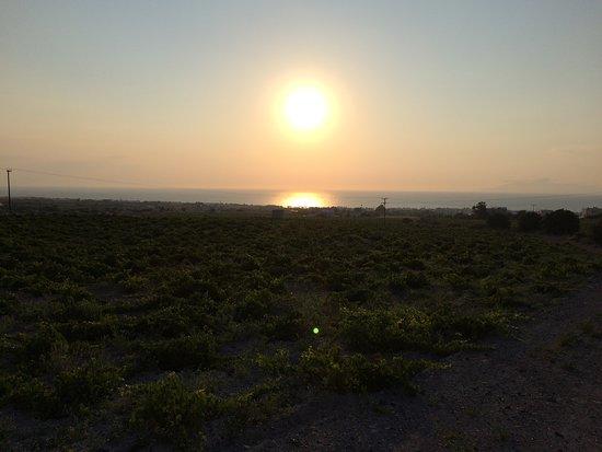 Santorini, Greece: Ανατολή ηλίου στον αμπελώνα. Σαντορίνη