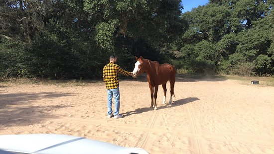 Cat Spring, TX: Free roaming horse