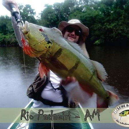 Rio Negro, PR: Peacock Bass