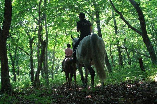 お馬に乗って、森の中へGO!