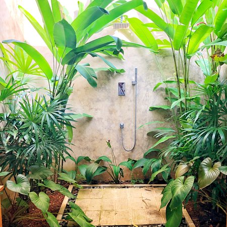 Paradies in the jungle