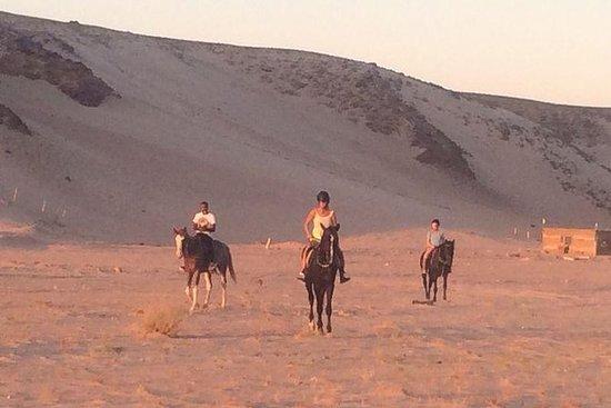 Horse Riding in Sharm el Sheikh