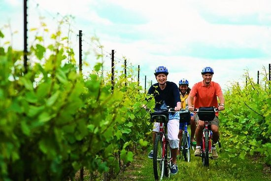Niagara Winery Bicycle Tour with...