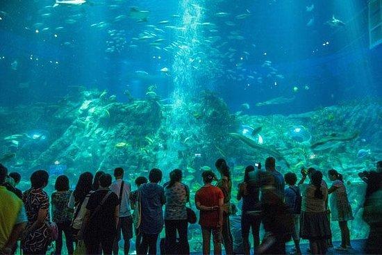 Coach Day Tour: Ocean Park Tour Med...