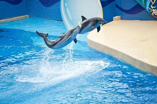 Ocean Park Full-Day Coach Tour with...