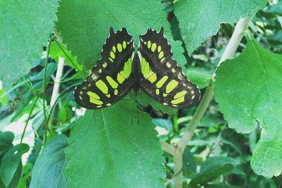 Excursion au jardin des papillons de...