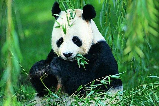 Chengdu Private Day Tour: Pandas...