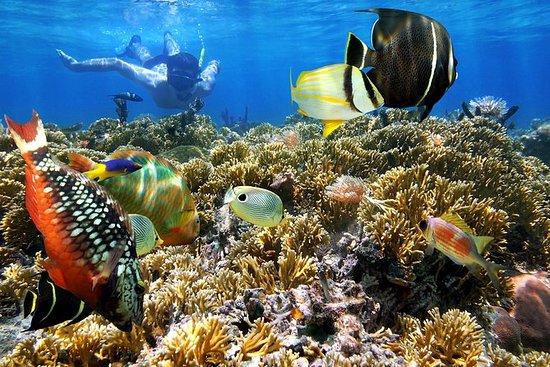 Snorkel dans les îles du Rosario et...