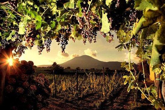 Wine Tasting on the slopes of Mount...