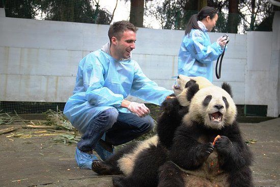 Halten Sie die Panda & Street Food...