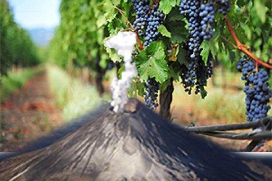 Dégustation de vins à l'Etna