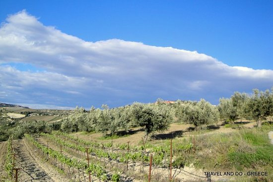 Private Peloponnese Countryside Tour and Wine Tasting including Lunch: Private Wine Tasting Peloponnese Countryside Tour including Lunch a la carte
