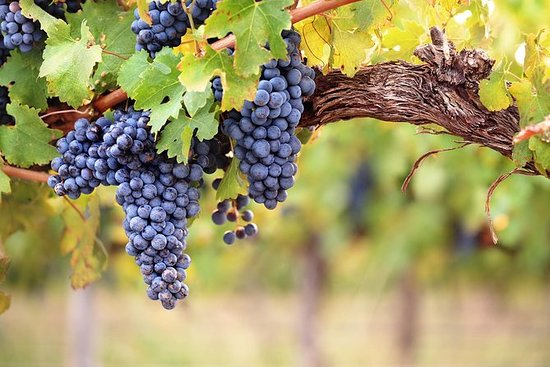 Full Day Guided Tour: Three Wineries...