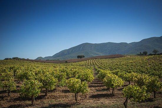 Tour del vino Arrábida