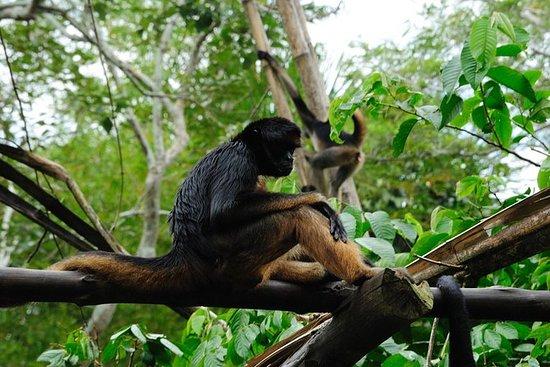4-Day Iquitos Amazon Jungle Adventure...