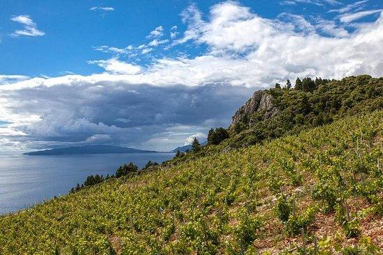 Degustación de vinos sonrientes en la...