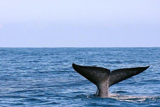 Whale Watching Tour a Mirissa da