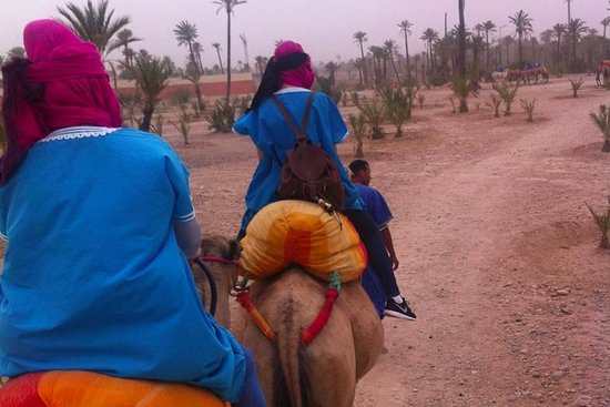 Camel trekking in the palm grove of...
