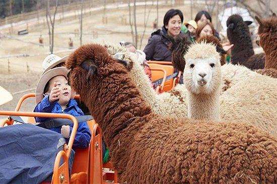Alpaca World & Snow Scenic Gondol...