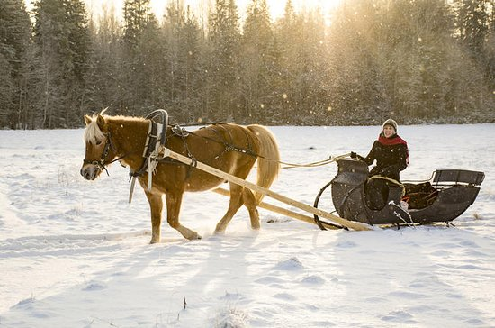 Winter Tour and sleigh ride in St...