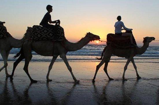 Sunset Camel Ride oder Reiten am...