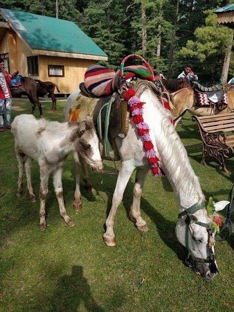 JKTDC TOURIST BUNGALOW